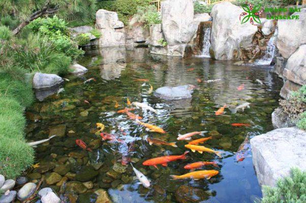 Hồ cá koi Tây Ninh