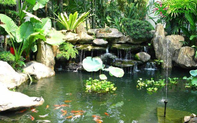 Hồ cá koi kết hợp thác nước