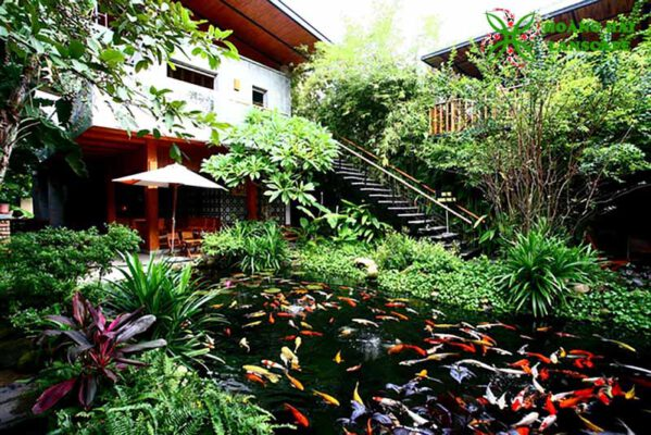 Hồ cá koi quán cafe 1