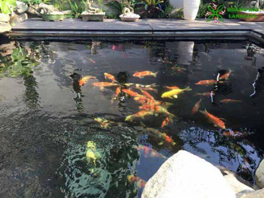 Hồ cá koi sân thượng mẫu 1