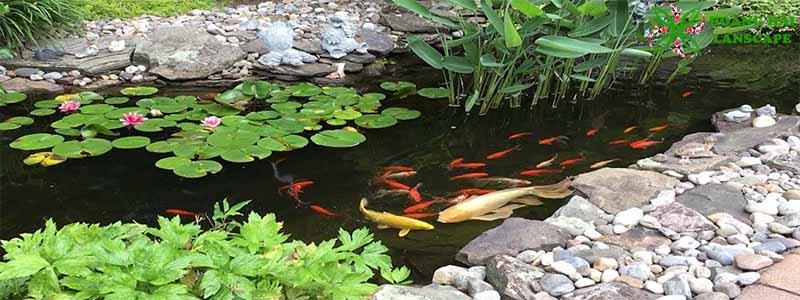 Hồ cá koi sân vườn mẫu 5