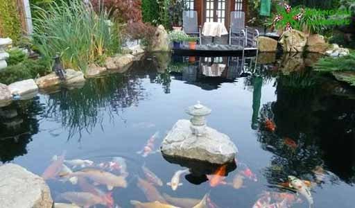 Hồ cá koi trong nhà mẫu 4