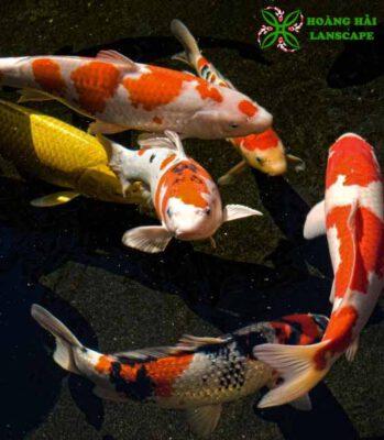 Làm hồ cá koi quận 12