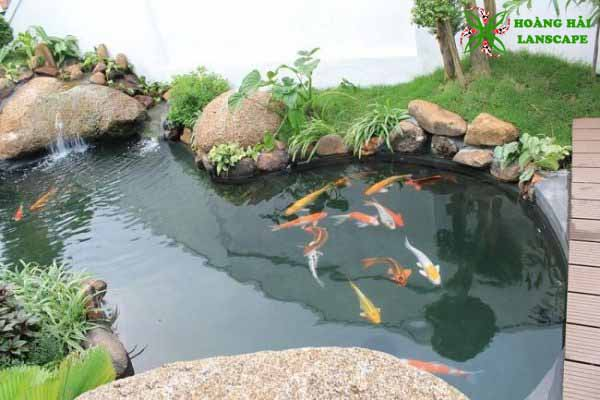 Thi công hồ cá koi Củ Chi