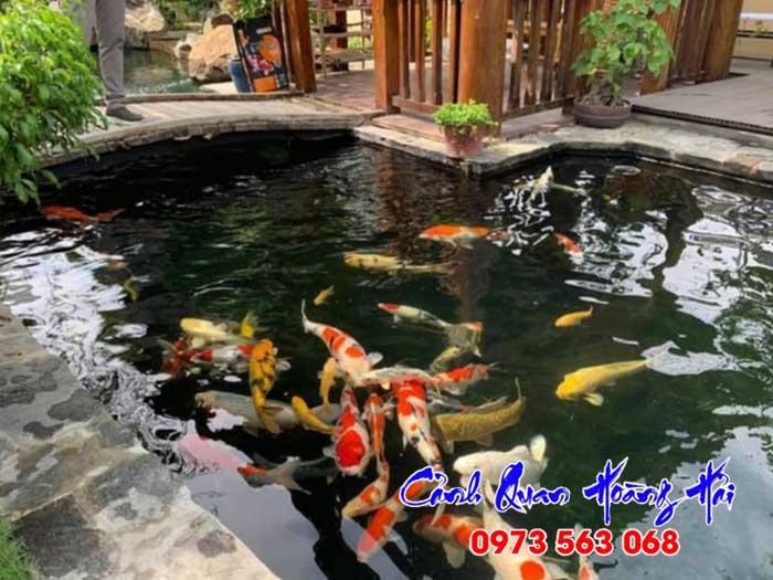 Thiết kế hồ cá koi trong nhà đẹp