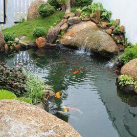 Hồ cá koi ngoài trời đẹp 10