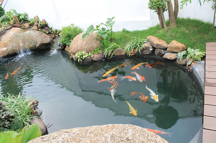 Hồ cá koi ngoài trời đẹp 4