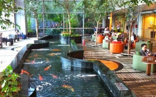 Xây dựng thiết kế và thi công hồ cá koi tại Tiền Giang
