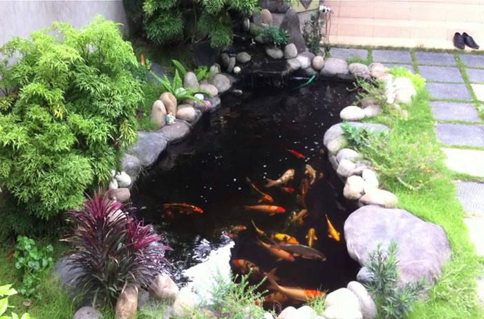 Hồ cá koi bên hông nhà