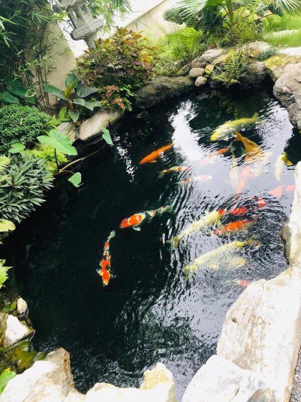 Thi công hồ cá koi quận 4