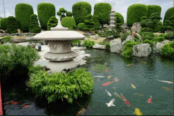 10 bước xây dựng hồ cá Koi