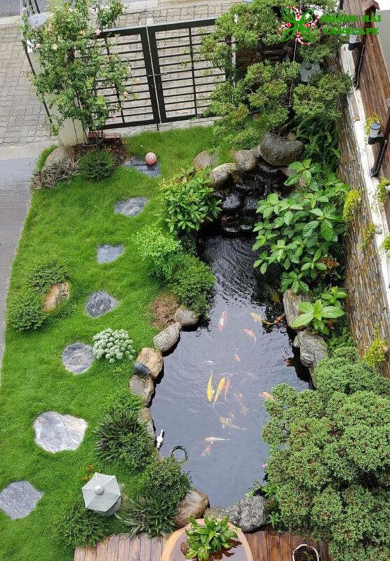 Hồ cá koi sân vườn tại Củ Chi