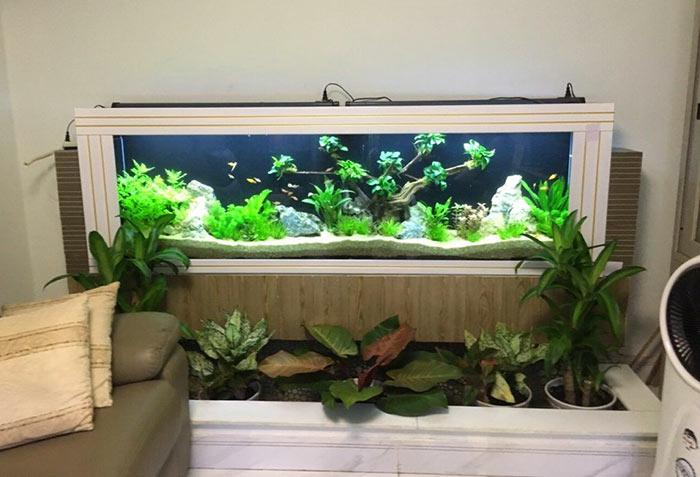 Tiểu cảnh hồ cá trong nhà 08