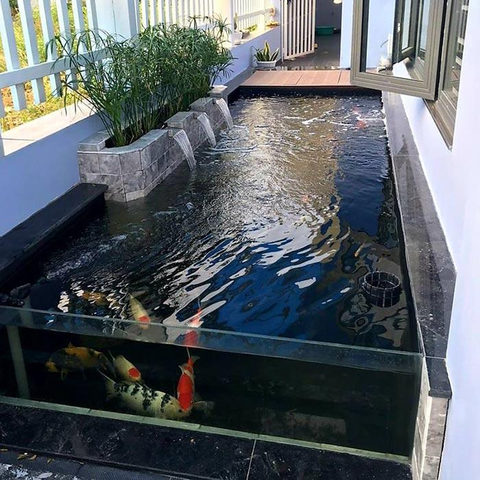 Hồ cá koi mini bằng kính - Hình 4