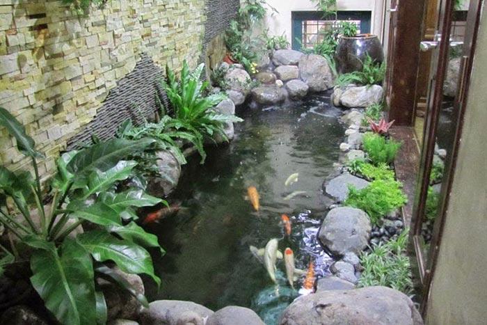Hồ cá koi mini trong nhà - Hình 4