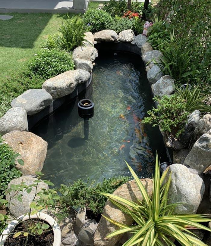 Hồ cá koi mini trong sân vườn - Hình 1