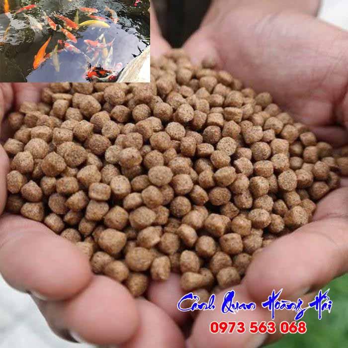 Các loại thức ăn cho cá koi