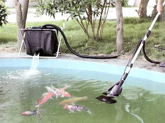 Vệ sinh hồ cá koi